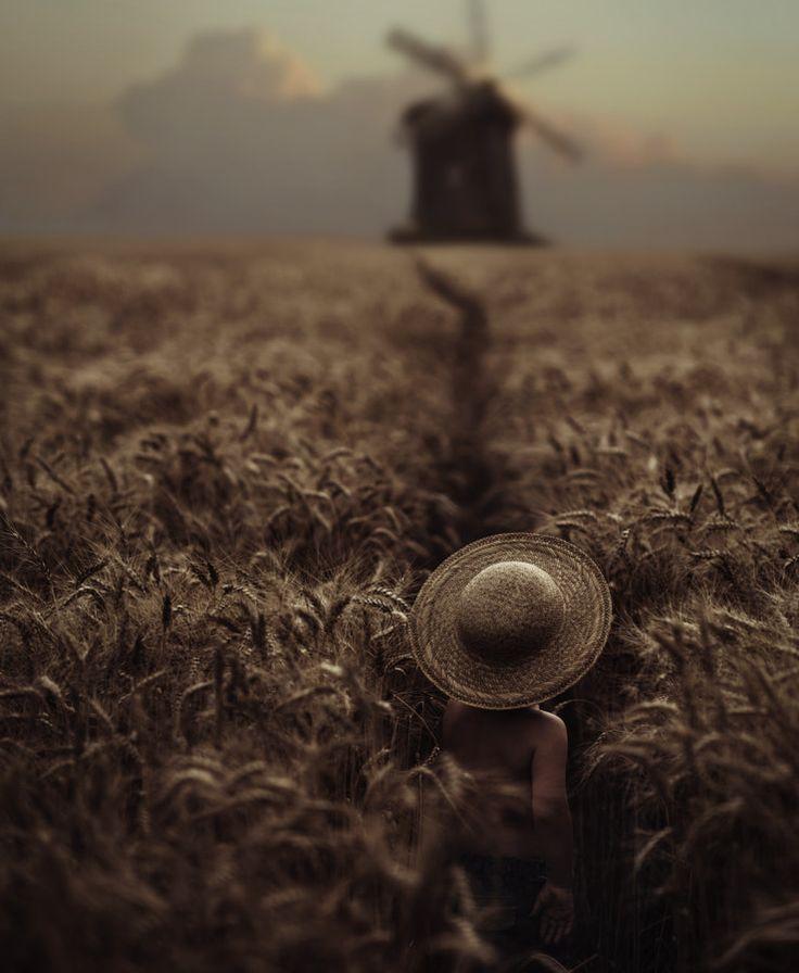 field by David Dubnitskiy - Photo 220043577 / 500px
