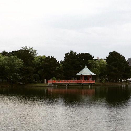 Rainy day in Ohori Park #fukuoka #japan