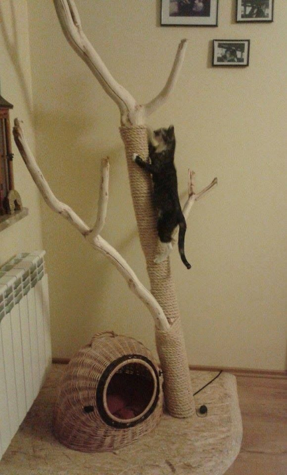 312 best draco cage ideas images on pinterest for Diy cat playground