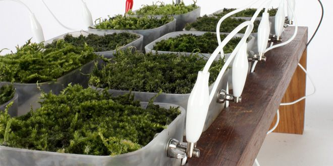 These Mad Scientists Want to Replace Solar Panels With Potted Plants