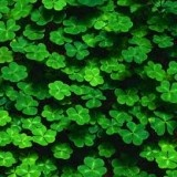 St Patrick's Day in Boston!