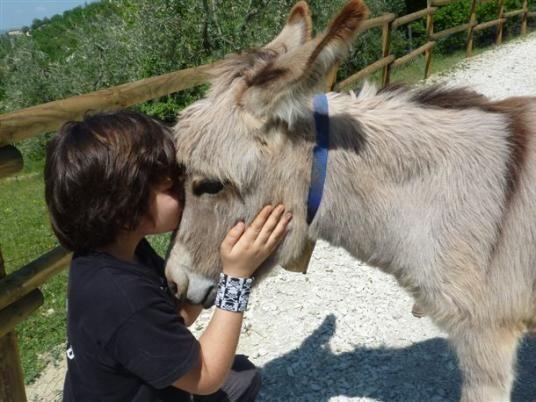 A contatto con gli animali
