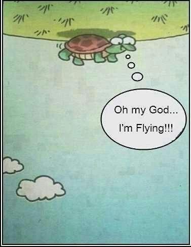 ¿Qué le dirías a esta tortuga que ha descubierto un punto de vista tan excitante?