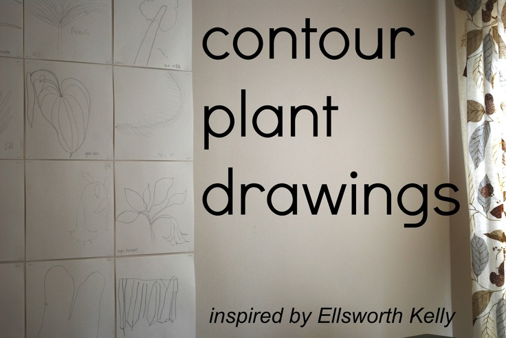 mamascout: make :: contour plant drawings ala Ellsworth Kelly