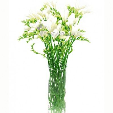 21 best bulk white flowers images on pinterest white flowers freesia flowers white mightylinksfo
