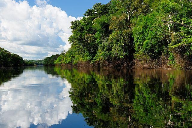 Amazone, Brésil.