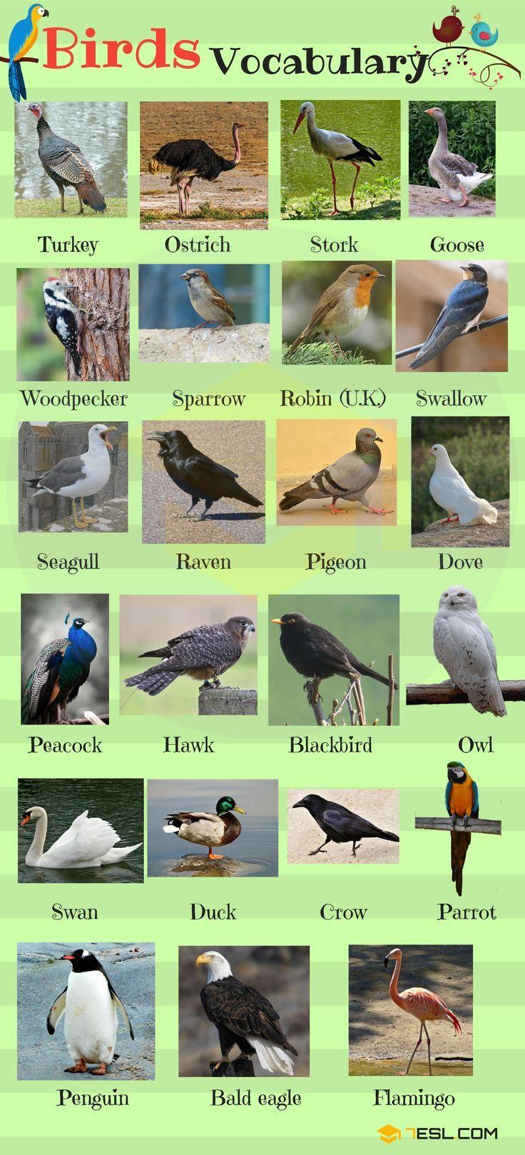 Bird Names List Of Birds With Useful Birds Images 7 E S L Planos De Aula De Ingles Vocabulario Em Ingles Animais