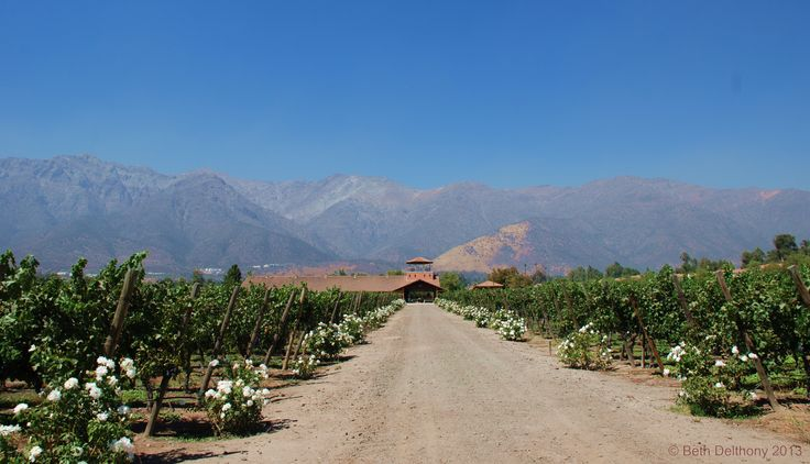 Visit Viña Aquitania a lovely boutique winery at the base of the Andes!