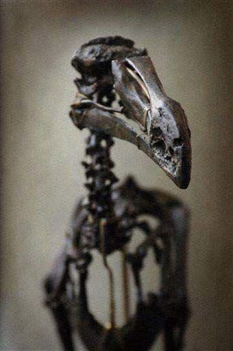 12 images de Dodo - La boite verte