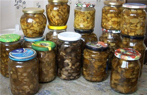 Заготовки из грибов на зиму | Печем и варим