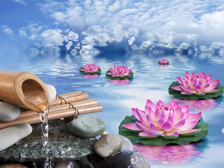 20 best g t feng shui window ideas images on pinterest feng shui feng shui considers the lotus a symbol of empowerment and enlightenment a lotus pond mightylinksfo