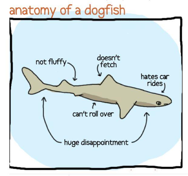 Pin By Sharks4kids Inc On Shark Memes Pinterest Funny Humor