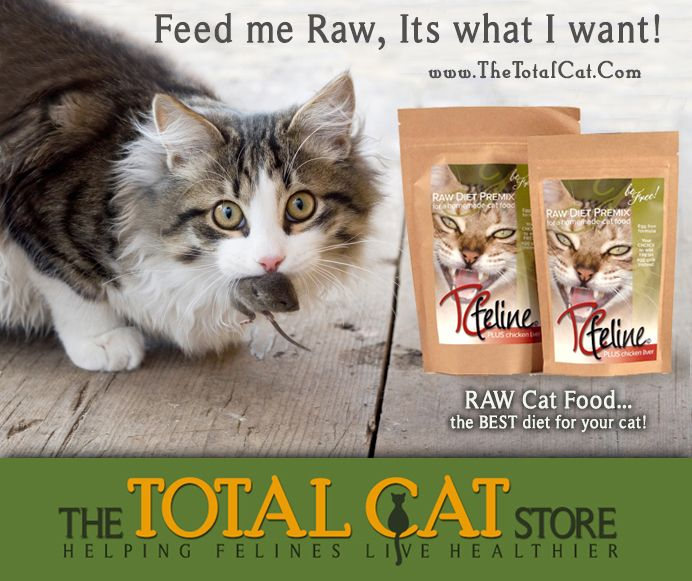 50 best homemade raw cat food how to make images on pinterest a quick easy and affordable solution to making homemade raw cat food forumfinder Choice Image
