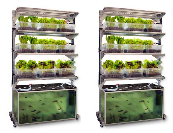 """We love this concept which will allow you to enjoy a meal a day of healthy home grown food. You get a portion of fish and a side of salad. """"Aquaponics farming is a technique that combines the cultivation of fish with the growing of vegetables. The fish provides rich fertilizer for the plants and in return, the plants clean the water from the tank. The fish and the plants co-exist in a symbiotic relationship."""" If you are into this, check out Growing Power and get schooled on urban…"""