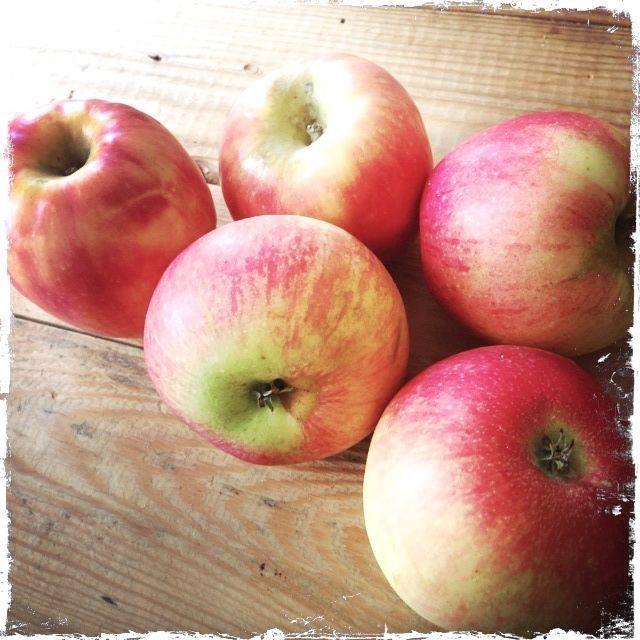 Spröd Äppelpäppelpaj