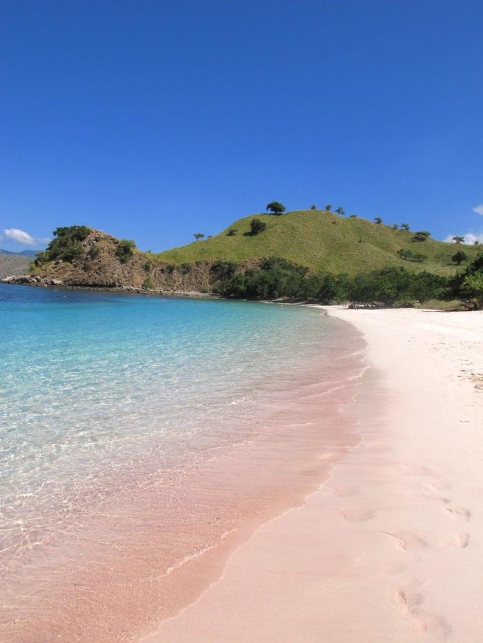 The magenta shade of the pink beach in Komodo Island. Indonesia.