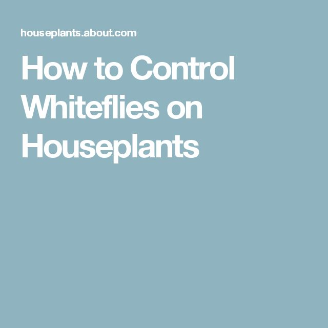 How to Control Whiteflies on Houseplants