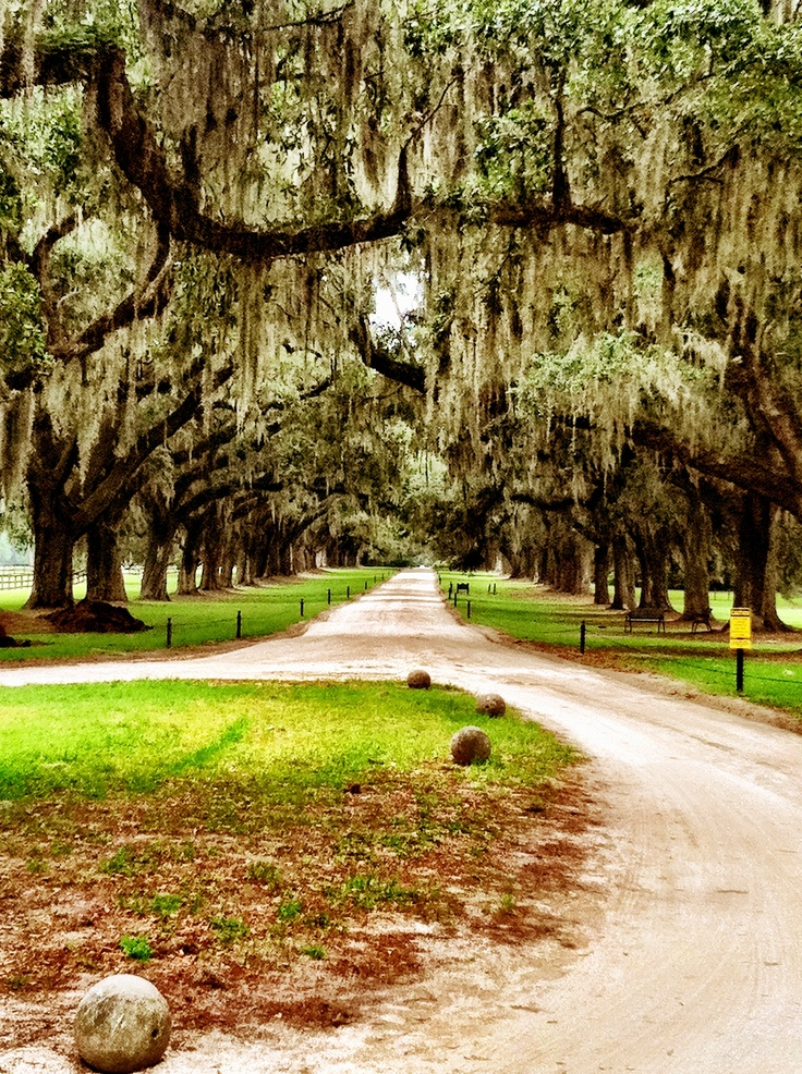 Beautiful.    (Boone Hall Plantation - Charleston, SC)  It is said that Tara in Gone With the Wind was modeled after this plantation in the Civil War era. There are slaves cabins and working fields and an outrageous mansion.
