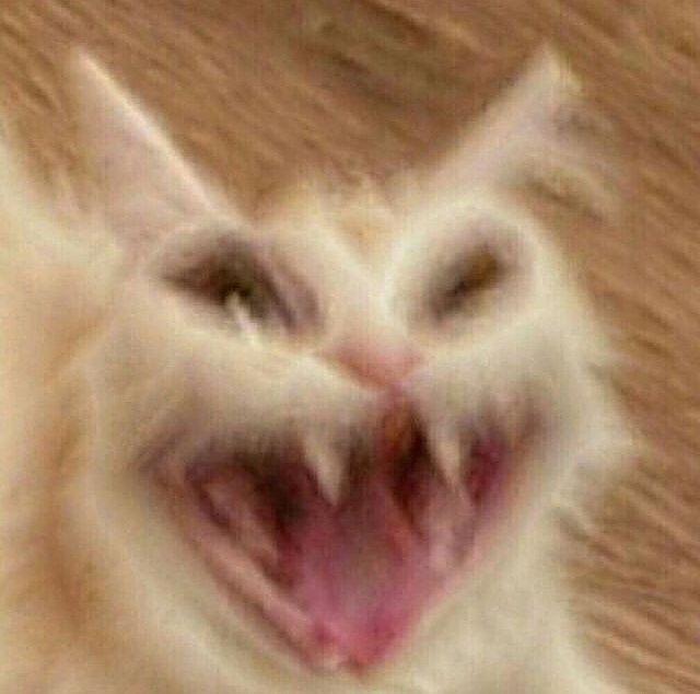 Cats Kittens Cuteness On Instagram Follow Adorablemeowcats Follow Adorablemeowcats By Unknown In 2020 Cute Animal Memes Cat Memes Funny Animal Memes