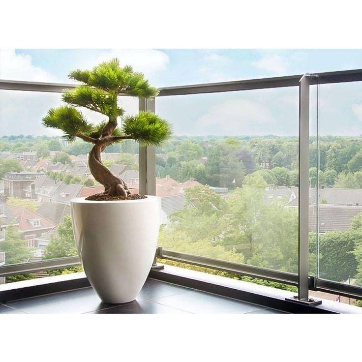 kunst_pinus_bonsai_in_canna_vaas.jpg (900×900)