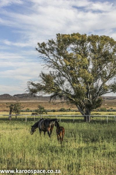 Gelykfontein Farm near Gariep, with its thoroughbred horses, Nguni cattle and indigenous veld goats, boasts six beautiful places to stay on the farmstead.