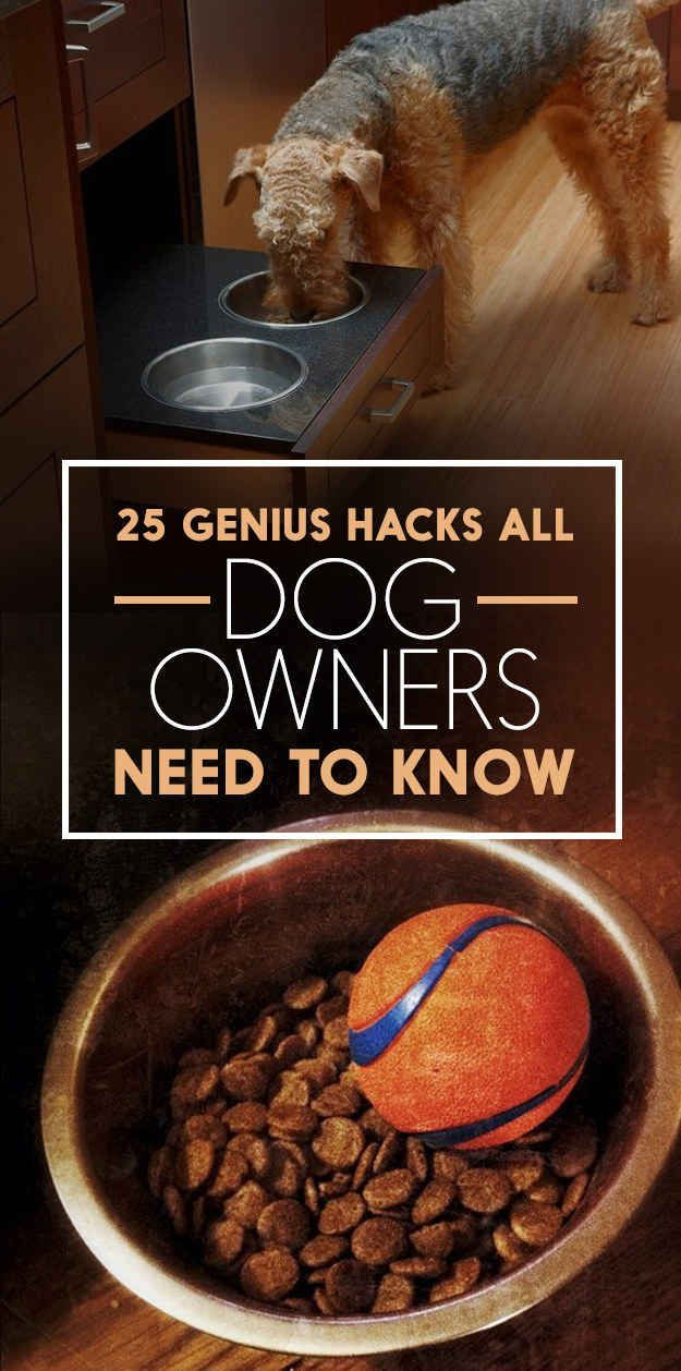 25 Genius Hacks That Make Having A Dog So Much Easier I see myself doing many of these for Betsy.  #utcpetsitting @utcpetsitting #lajollapetsitting #sandiegopetsitting #vettech #vettichlife #veterinarytechnicianpetsitting #profesisonalpetsitting http://www.enjolijuliagomez.com