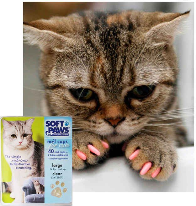 Don't de-claw your cats! If your cat is regularly drawing blood, cover his paws with Soft Paw vinyl coverings for their paws. | 26 Hacks That Will Make Any Cat Owner's Life Easier