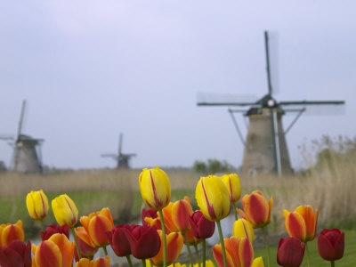from Holland