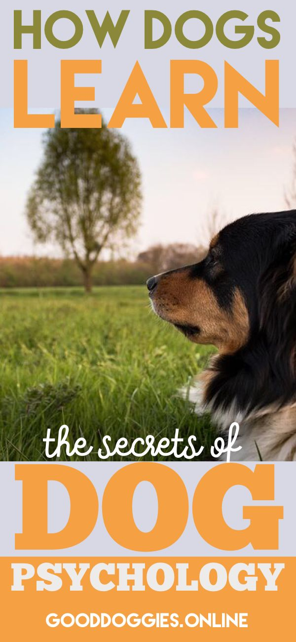 How Dogs Learn: The Secrets of Dog Psychology : gooddoggies