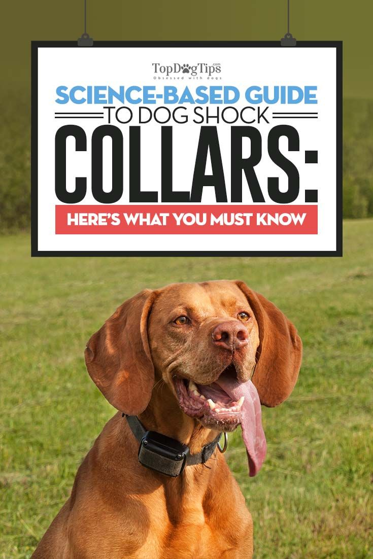An Evidence Based Guide To Shock Collars Dog Science Shock