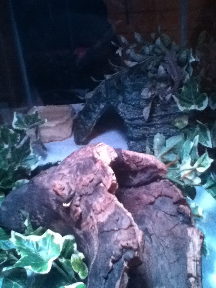 65 Best For My Reptile Loves Images On Pinterest