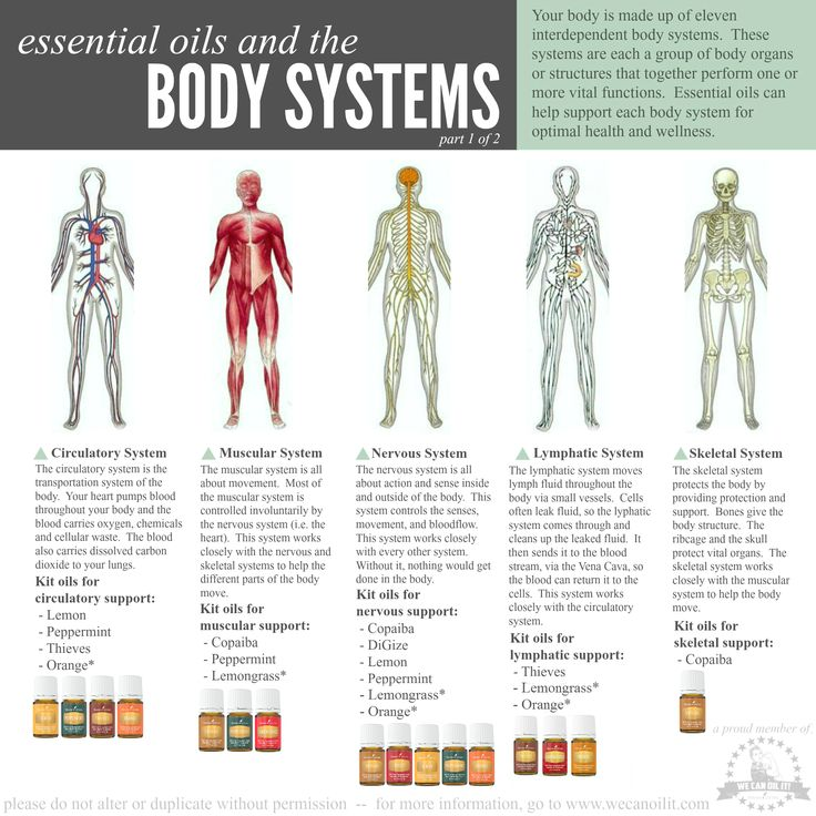 Young Living Essential Oils And Body Systems Supported
