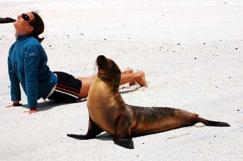 Yoga with sea lions
