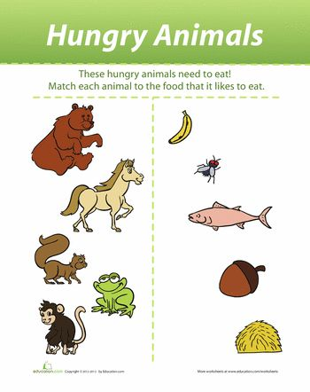 what do animals eat education worksheets animals preschool worksheets animal activities. Black Bedroom Furniture Sets. Home Design Ideas