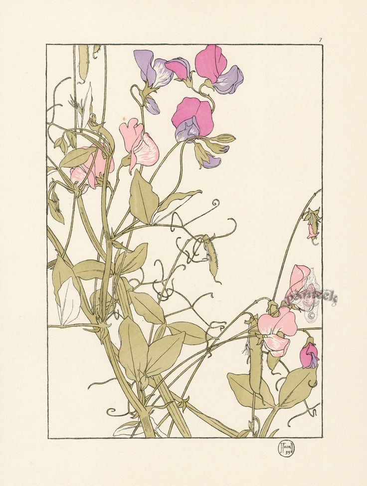 "The Sweet Pea - Jeannie Foord - ""Decorative Flower Studies"", Pochoir Prints, 1901."