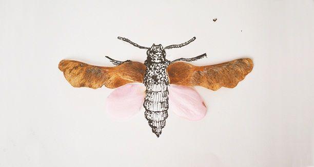 autumn garden  moth