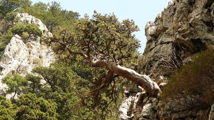 Imbros Gorge, Western Crete
