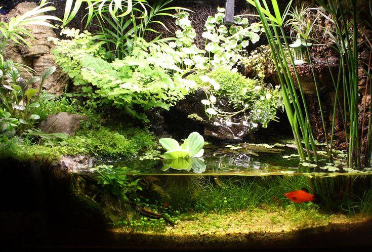 10gal Paludarium - Page 4 - Paludariums - Aquatic Plant ... 10 Gallon Paludarium