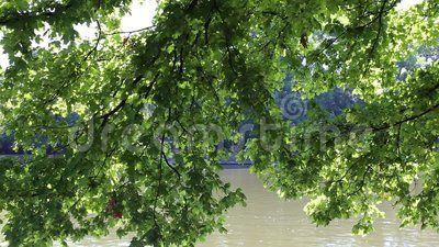 Glint of water on green leaves - under a tree lakeside.