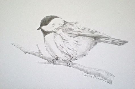 Chickadee pencil drawing bird art  , painting by artist Sandra Merwin