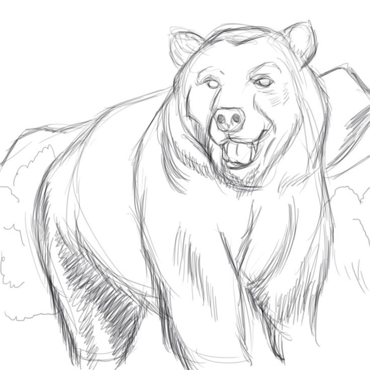 Bear Face Line Drawing : Best images about sketches on pinterest