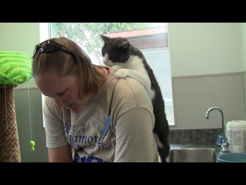 After This Shelter Cat Receives A Back Massage, He Returns the Favor. So Awesome.
