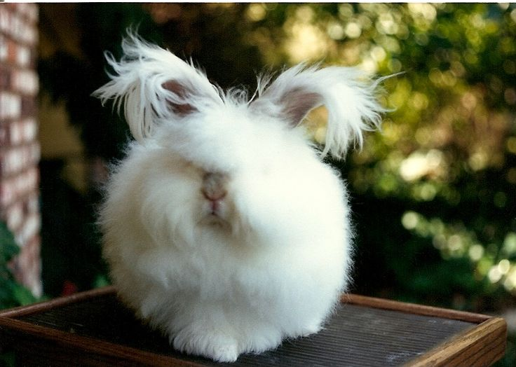 34 best rabbits images on Pinterest Bunnies, Rabbit and Rabbits - resume rabbit cost