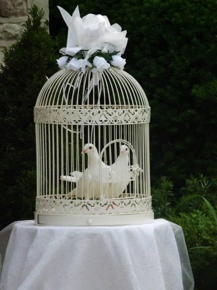 Beautiful White Wedding Doves