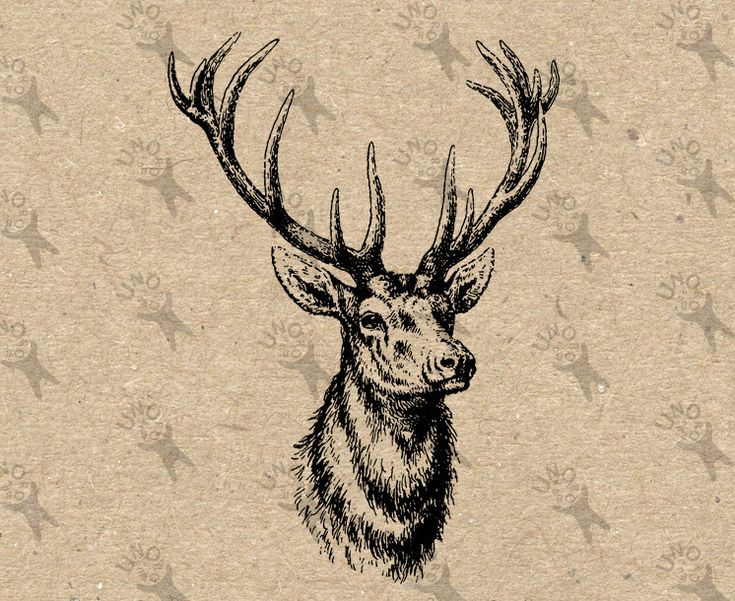 Vintage image Deer Instant Download Digital printable clipart graphic Burlap Fabric Transfer Iron On Pillows Totes Tea Towels  etc HQ 300dpi by UnoPrint on Etsy