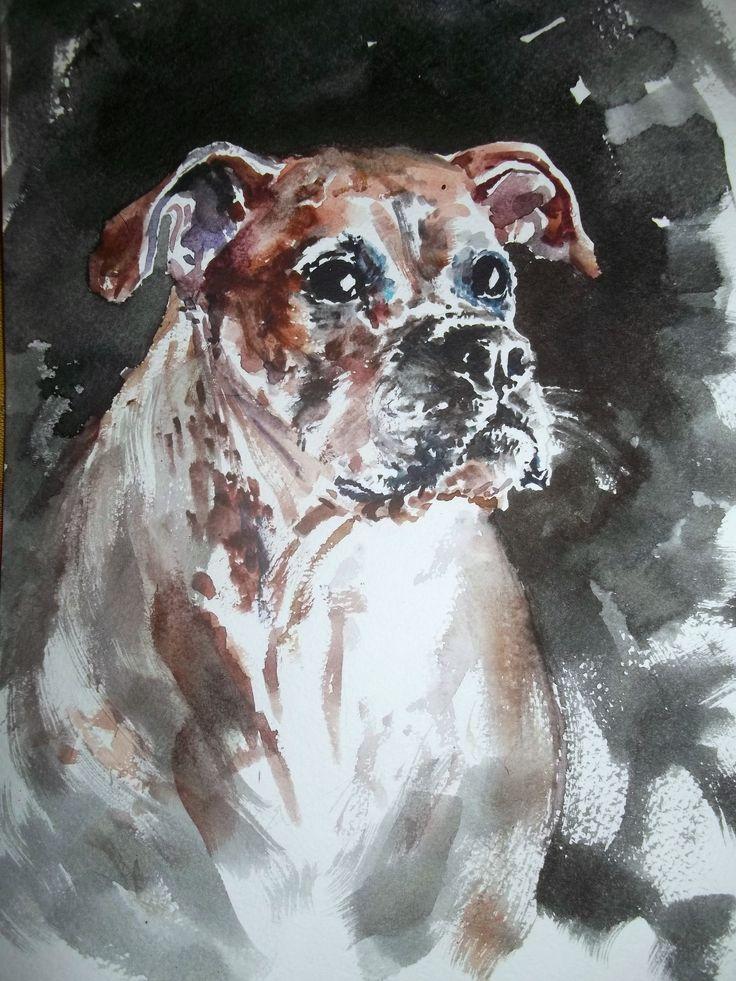 Boxer portrait. Watercolour, Cristina Grnciuc.