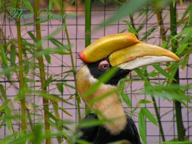 La théorie du tout: J'ai pris ces trois photos au zoo de la palmyre