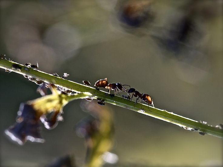 Two Ants by Christophe Arnoult on 500px