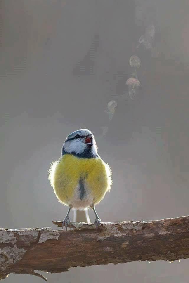 So Cold You Can See A Bird S Tweet Mit Bildern Hubsche Vogel