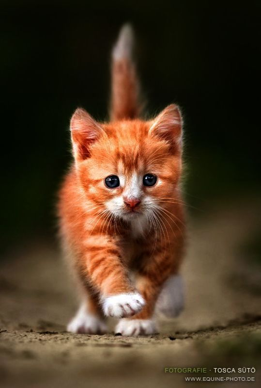 Trendy Top 10 Cute Cats Breeds Cutest Cats And Kittens Ever
